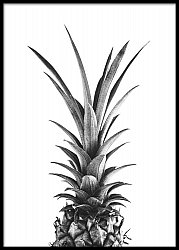 Black and White Pineapple
