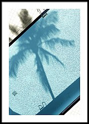 Palm Tree and Pool